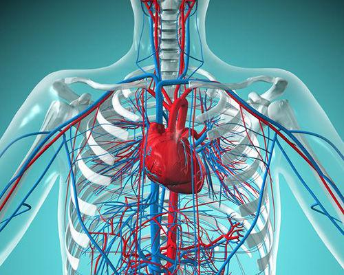 کلینیک قلب و عروق